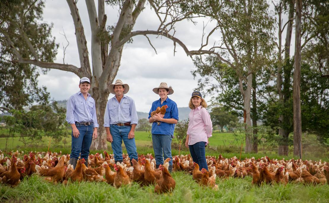 Buy eggs direct from farmer