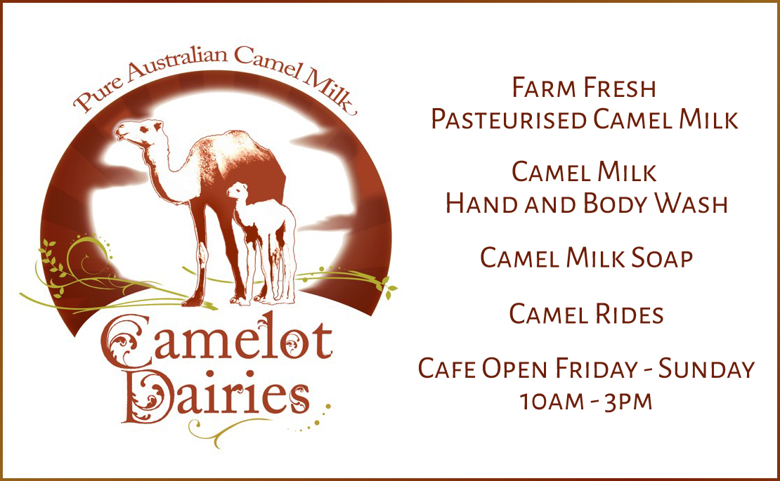 Buy camel milk direct from farmer Gympie
